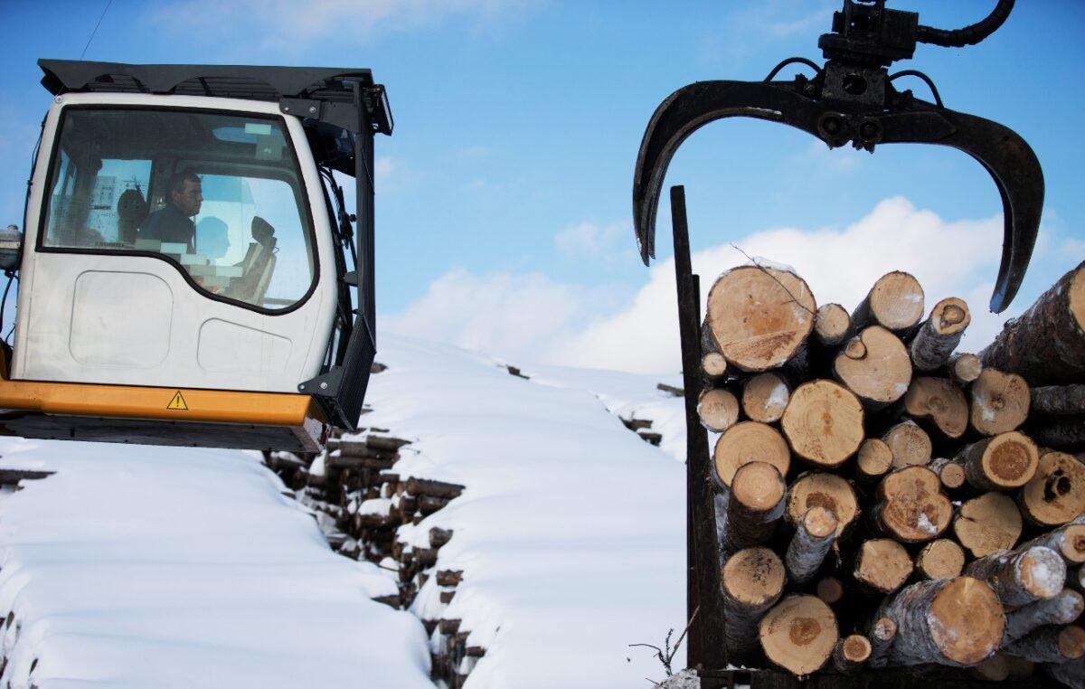 Softwood-logs