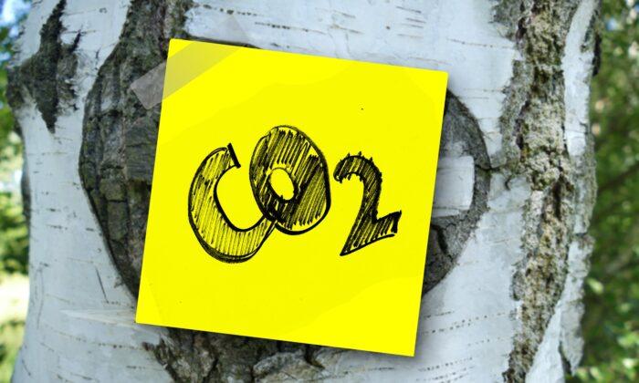 A CO2 label on a birch tree (Gerd Altmann via Pixabay)