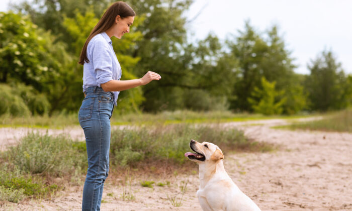 With kind, consistent training, deaf dogs can learn hand signals and become wonderful family pets. (Prostock-studio/Shutterstock)