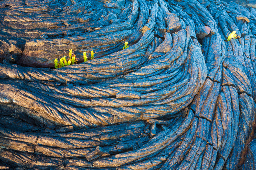 Amazing,Old,Lava,Pattern,And,New,Fern,Growing,Through,It