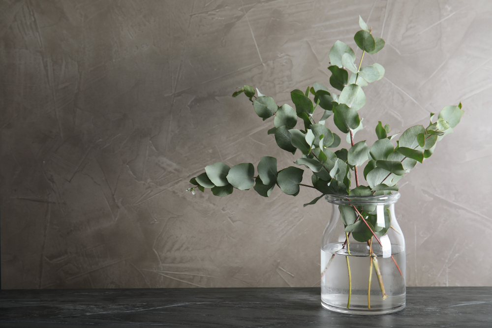 Bunch,Of,Eucalyptus,Branches,With,Fresh,Leaves,In,Vase,On