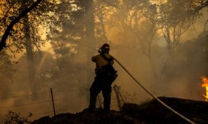 US Proposes Big Increase in Forest Management to Tackle Wildfires