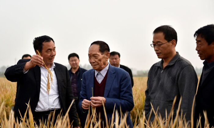 Yuan Longping (C) stands in a field of hybrid rice in Handan in northern China's Hebei Province, on Oct. 15, 2017. (Chinatopix via AP)