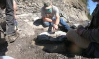 Amateur Fossil Hunter Finds 84 Million Year Old Fossilized Turtle on Vancouver Island