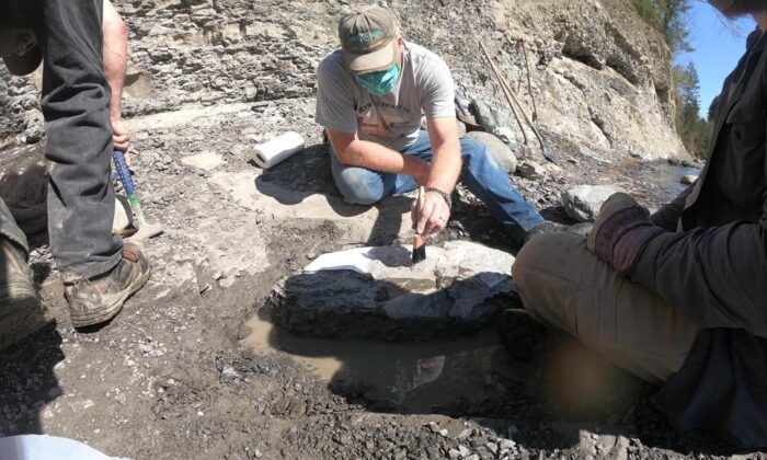 Russell Ball found a turtle fossil on the Puntledge River in what is known as the Trent River formation in January. (The Canadian Press)