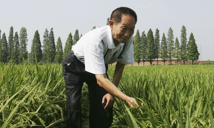 """Yuan Longping, who is lauded in state media as the """"father of hybrid rice,"""" poses for a photo at a hybrid rice planting field in Changsha city, Hunan Province, on June 20, 2006. (Guang Niu/Getty Images)"""