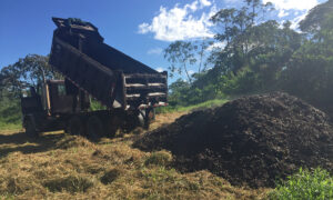 Researchers Dump Tons of Coffee Waste Onto Degraded Land, 2 Years Later It's Transformed