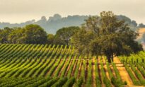 Remembering 2 California Wine Pioneers