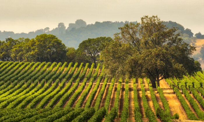 Jim Clendenen and Dr. David Bruce were iconic figures in California's world of fine wine. (Gary Saxe/shutterstock)