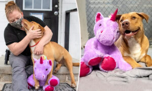 Stray Dog 'Steals' Same Stuffed Unicorn 5 Times, so Animal Control Officer Buys It for Him