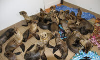 Pacific Marine Mammal Center Celebrates 50 Years of Caring for Sea Life