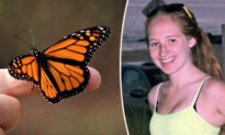 Butterfly Visits Dad After Daughter's Death, Inspires Him to Raise Monarchs in Her Memory