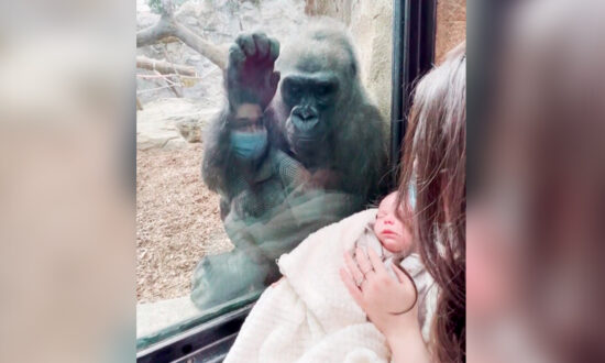 Video: Mom and Her Baby Son Get Surprise Visit From Gorilla Who Recently Gave Birth