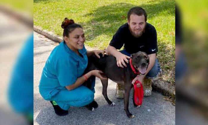(Courtesy of Humane Society of Tampa Bay)