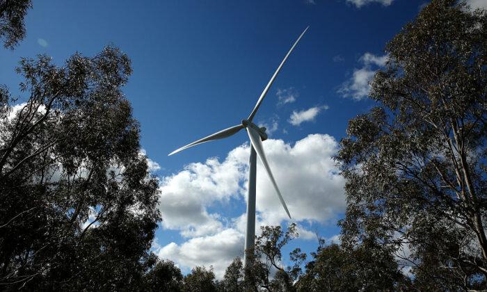 A wind turbine is seen set amongst trees at the Taralga Wind Farm in Taralga, New South Wales, Australia on Aug. 31, 2015 in Taralga, Australia. (Photo by Mark Kolbe/Getty Images)