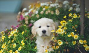 Beware of backyard pet dangers