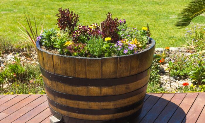 Gardening barrels, especially half-barrels, are easy to try. (Roxane 134/Shutterstock)