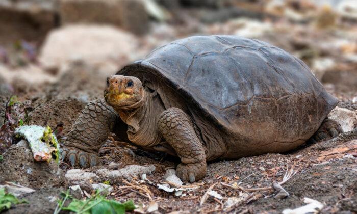 (Galapagos National Park/Handout via Reuters)