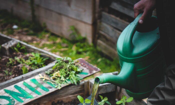 Outdoor Gardening Territory (Johnathan Kemper/Unsplash)