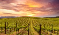 Liquid Test Drive: Tips for Visiting Wine Country