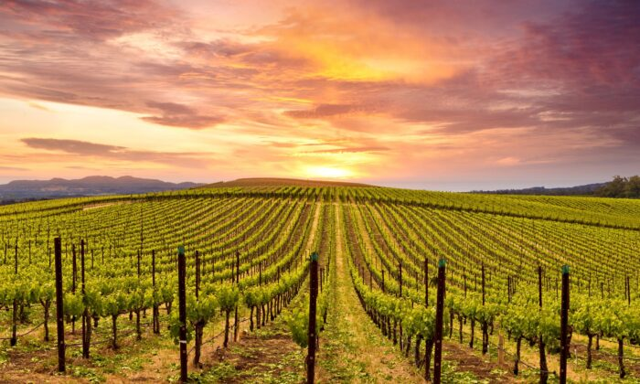 Napa Valley is often called a vinous Disneyland without the rides. (Michael Warwick/shutterstock)