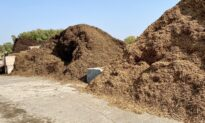 Cover Up—Why mulch matters no matter the season