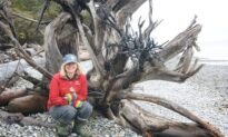 'Highly Intelligent': A Forestry Scientist's Journey of Discovering How Trees Communicate