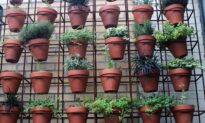 How to Create the Ultimate Small Space Garden