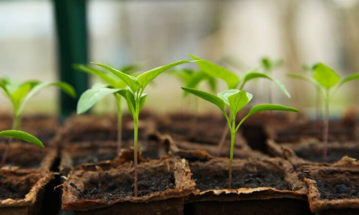 Growing plants from seeds is an easy way to diversify your garden.(J Garget/Pixabay)