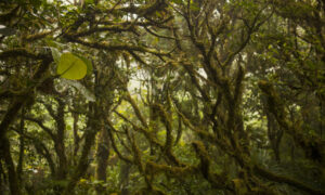 Monteverde Cloud Forest Is the Star of a Costa Rican Tour