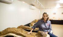 Australia's Largest Dinosaur Discovered in Southwest Queensland