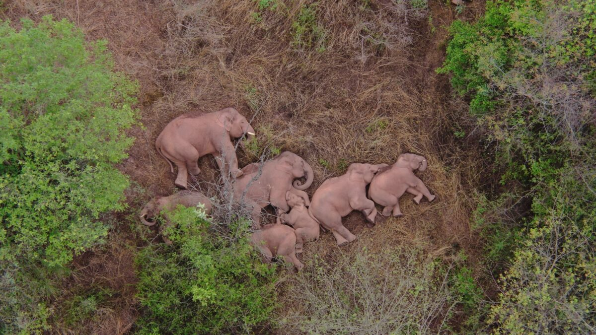 A herd of moving elephants