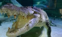 Family 'Proud' of Twin Who Fought Off Crocodile Attacking Her Sister in Mexico