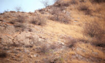 Can You Spot the Camouflaged Leopard Blending Perfectly Into This Rocky Hillside Scene?