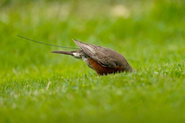 robin-feeds