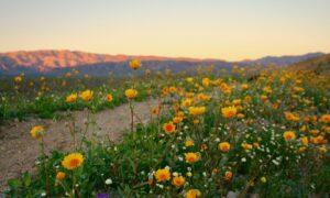 Desert Beauty: A Weekend in Palm Springs