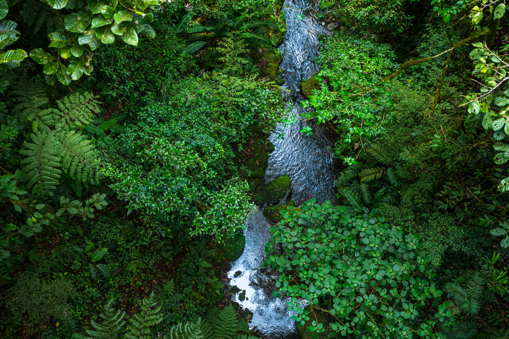 Aerial,View,Of,A,River,Flowing,In,The,Lush,Green