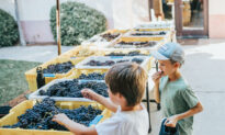 Kids Join the Fun at Family-Friendly Wineries