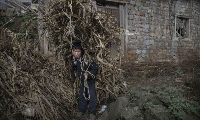 A farmer carries corn husks for feeding animals in Xiaobatian village, southwestern China's Guizhou Province on Feb. 7, 2017. (Kevin Frayer/Getty Images)