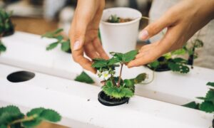 How to Grow Your Own Plant Medicine