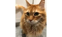 Irvine Family Blames Airline for Cat's Death During International Flight
