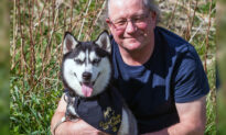 A Couple Sacrificed Getting a New Kitchen to Rescue Siberian Husky From Chinese Meat Trade