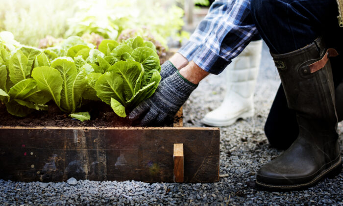 Save on expensive gardening supplies by using cheap, homemade alternatives. (Rawpixel.com/Shutterstock)