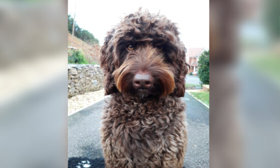 Therapy Dog Helps Prevent a Distressed Woman From Taking Her Own Life on a Motorway Bridge