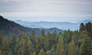 Into The Wild: California's National ParksBrace for Record Year