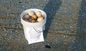 'Cherish These Times': Grandfather Leaves Bucket of Baseballs With Note at Batting Cage