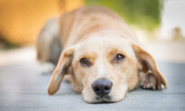 How to Safely Remove a Tick From Your Dog