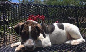 Puppies Abandoned in Texas Desert Seek Homes
