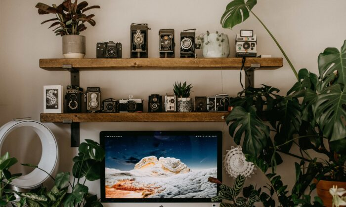 Incorporating plants in your life can add color, life and energy to your life. (Annie Spratt/Unsplash)