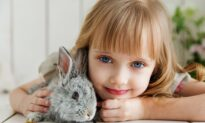 Raising Rabbits—These furry friends also have a fickle side